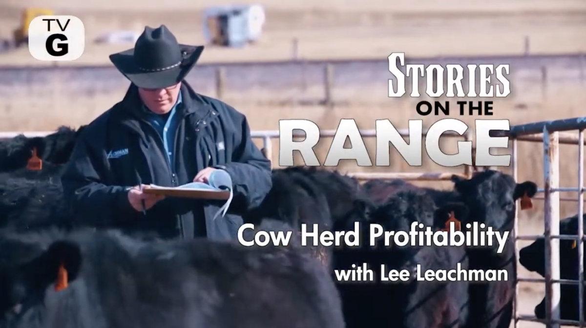Cow Herd Profitability Leachman