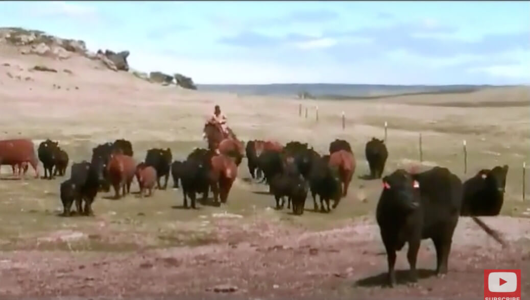 Lee Leachman on NCBA's Cattlemen To Cattlemen